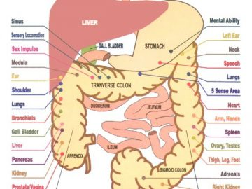 colon hydrotherapy colonic